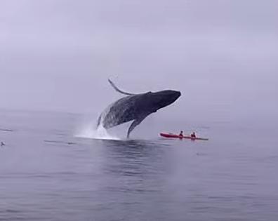 humpbackwhale_kayak1