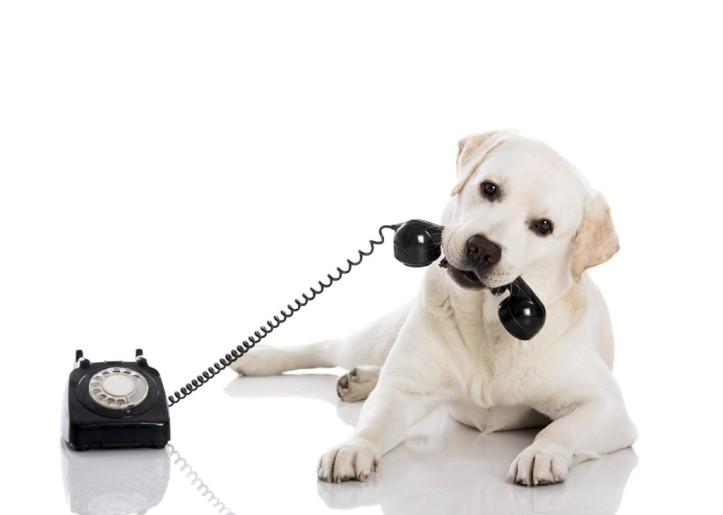dogphone1