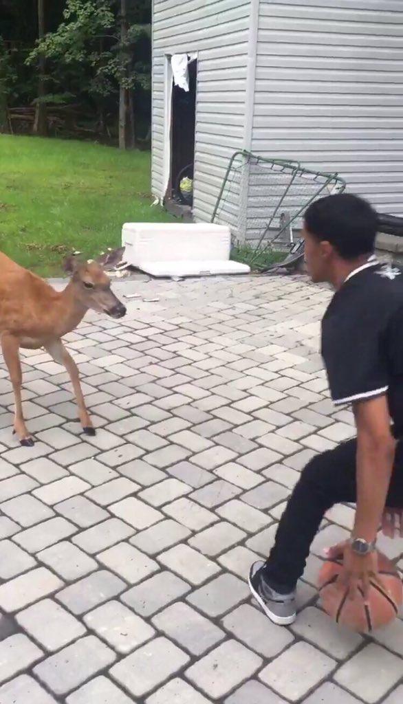 deer_bball1